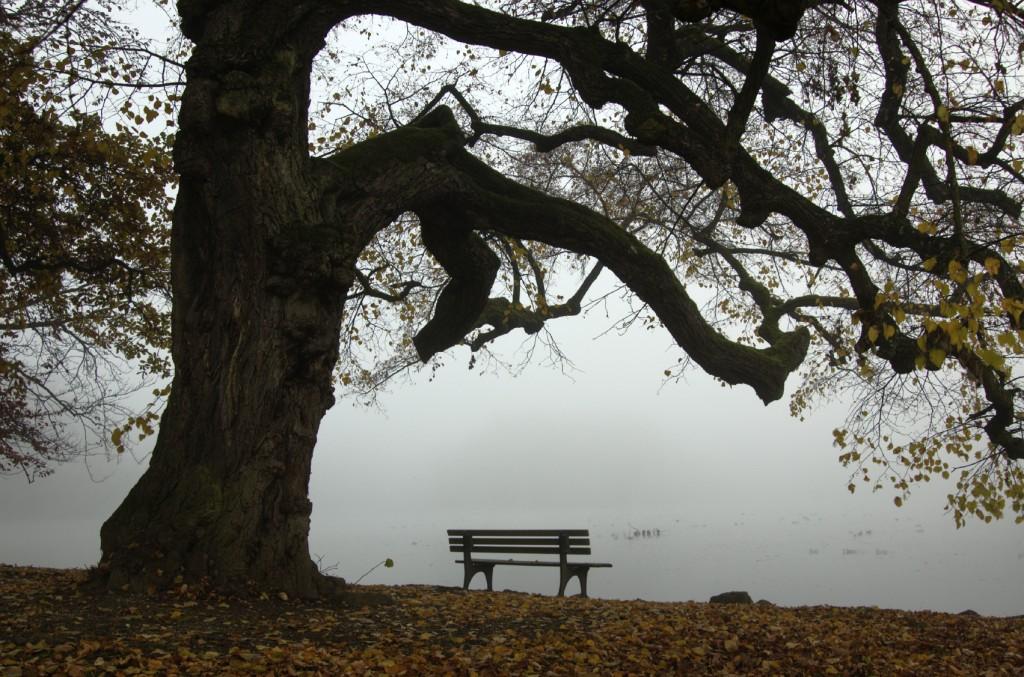 bench by a lake