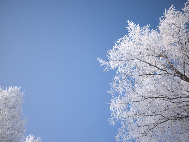 frost-trees