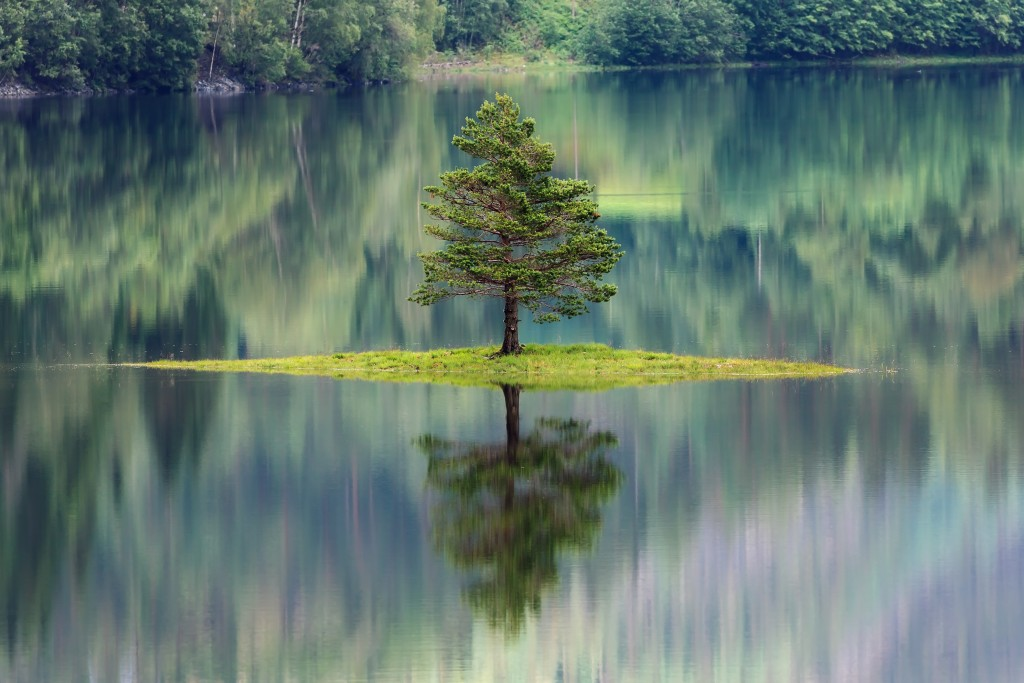 Isolated tree on a small island