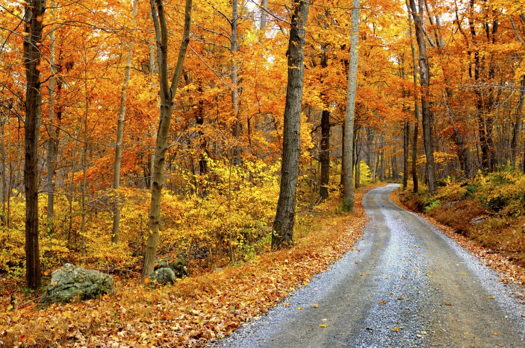 Road winding through a forest in autumn
