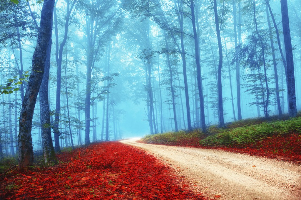 Beautiful mysterious red and blue color season forest with road. Intensity color filter effect used.