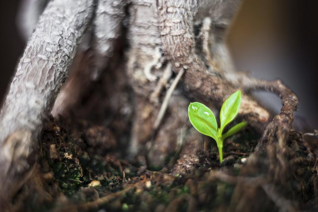 New life - small tree