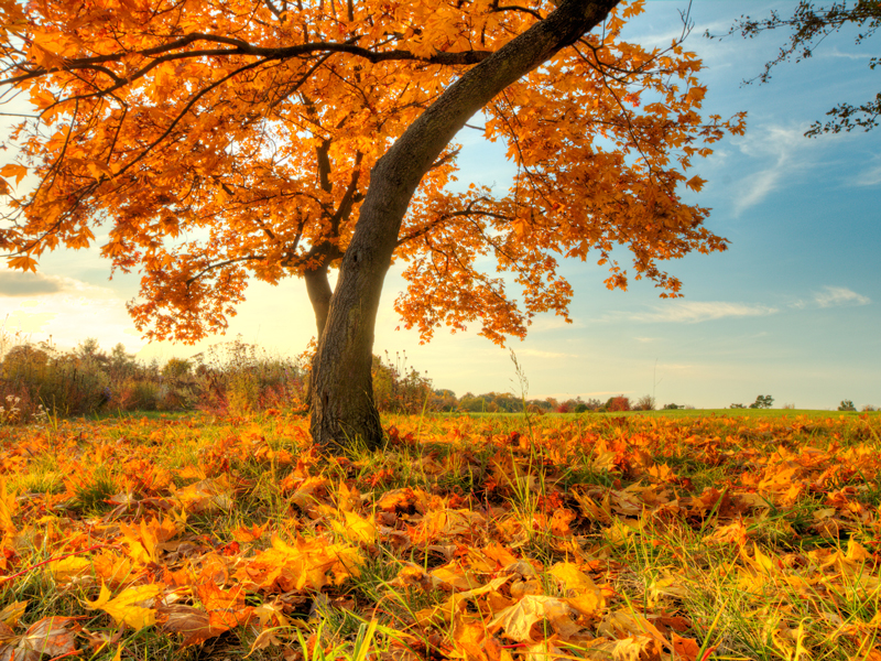 A tree in autumn
