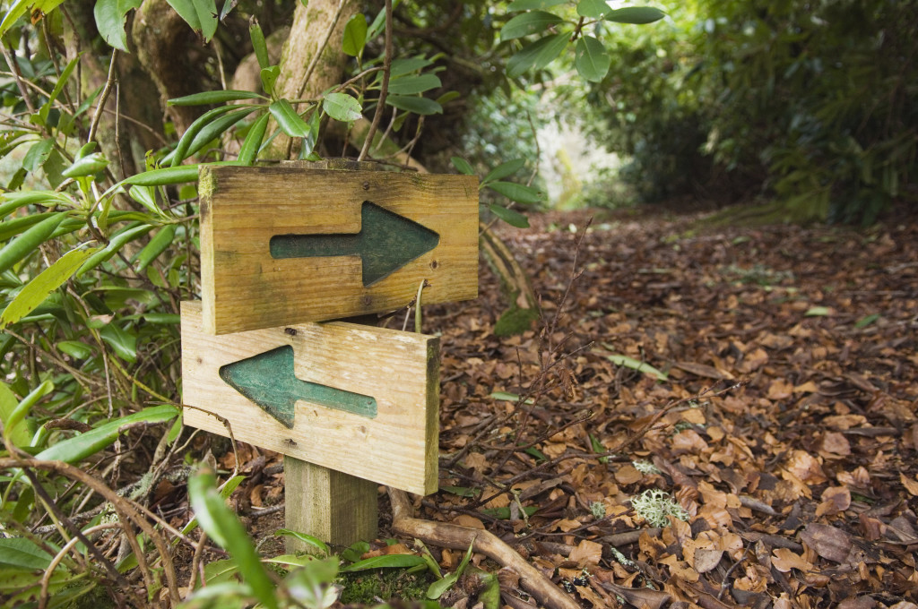 Choice of paths in woodland