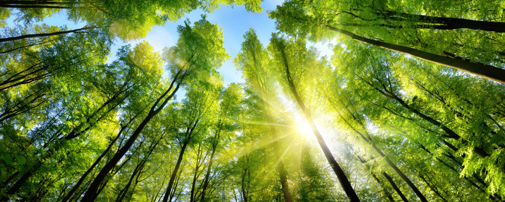 Enchanting sunshine on green treetops