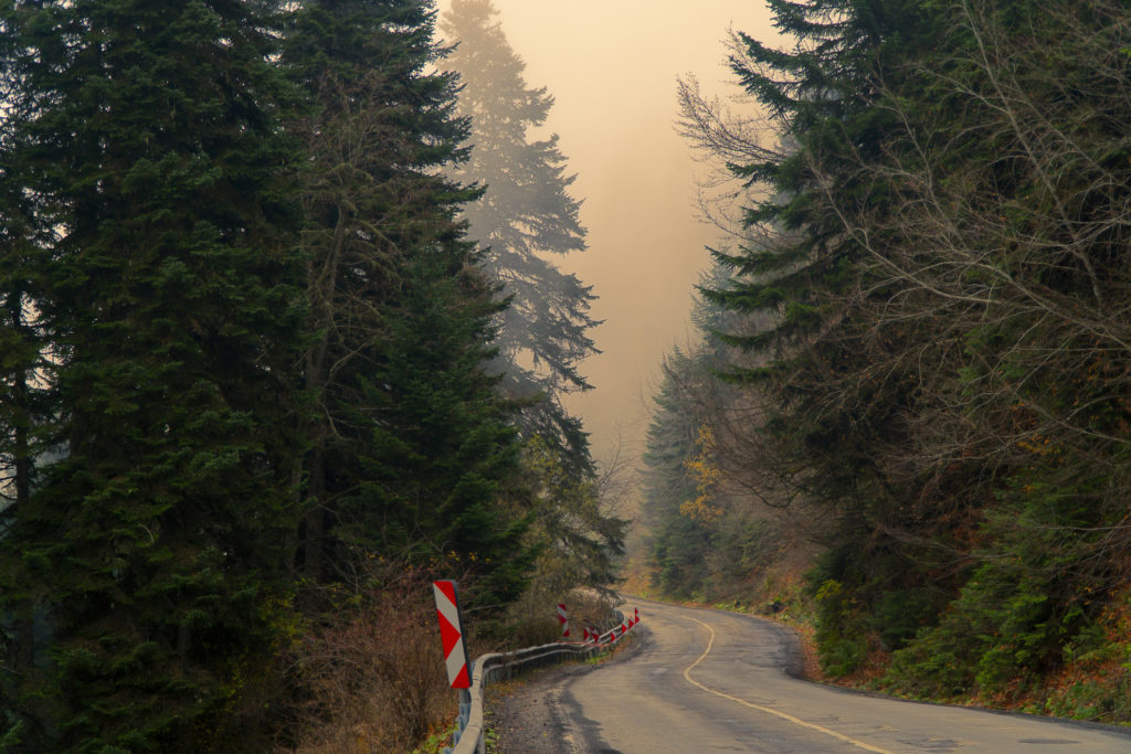 Foggy forest road